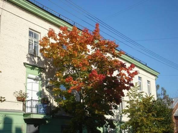 АВИЗО (Житомир) недвижимость.